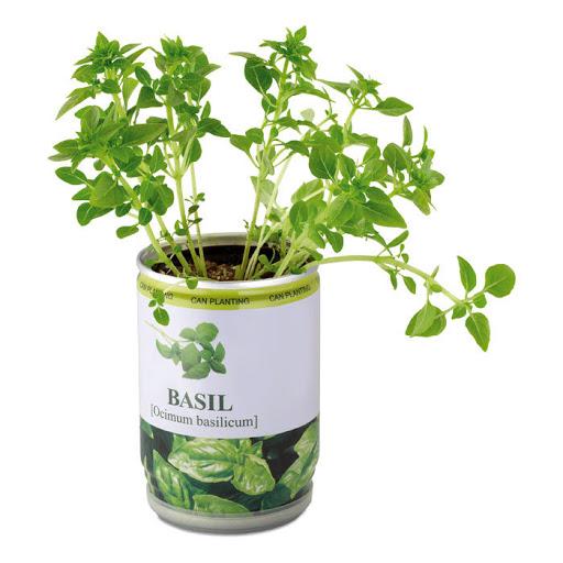 Basil Seeds in a Tin