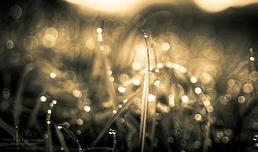 Photo: Evening Bokeh ©http://markuslandsmann.zenfolio.com/