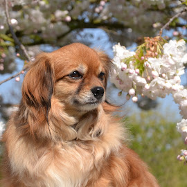 Enjoy the sun by Els He - Animals - Dogs Portraits ( springtime, outside, portraits, dogs, portrait, sunny, dog,  )