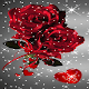 Red Rose Bouquet LWP Download for PC Windows 10/8/7