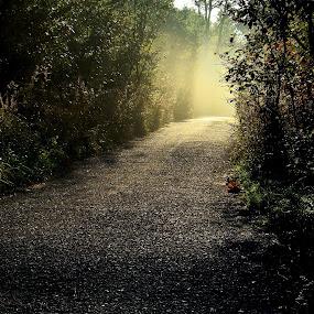 ...my morning autumn way.. by Karel Šula - City,  Street & Park  City Parks ( road )