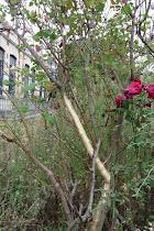 flora vachez_08