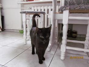 Photo: Zdjęcie wyadoptowanej kotki Lukrecji z nowego domu.