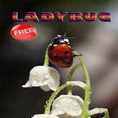 Ladybug Ideas