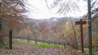 Photo: Der ,Babywald' am Wanderweg A8 westlich von Auf der Halle.