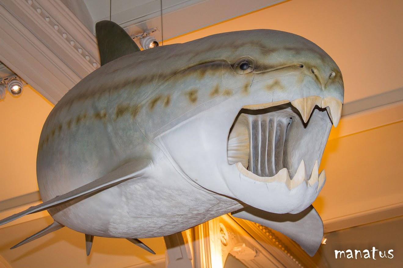 exposición del museo de historia natural