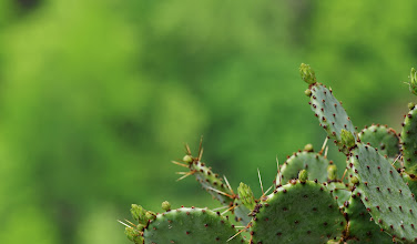 Photo: Prickly action