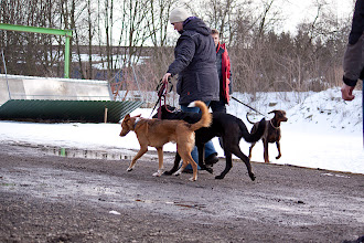 Photo: Thema Hundebegegnung