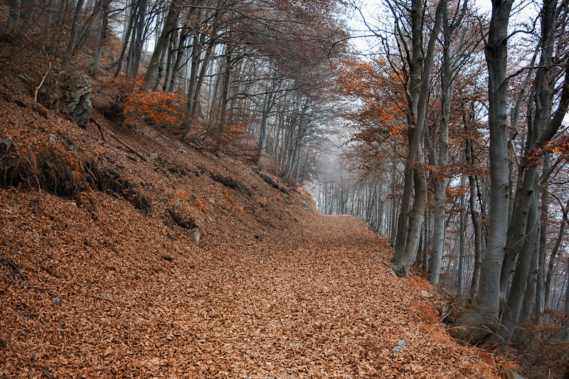 In the autumn forest di IsideB