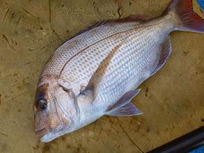 Photo: 真鯛もようやく顔を見せてくれました!