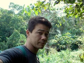 Photo: rainforest
