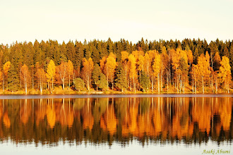 Photo: From last autumn in Oslo, Norway. The reflection of colorful trees was beautiful ...