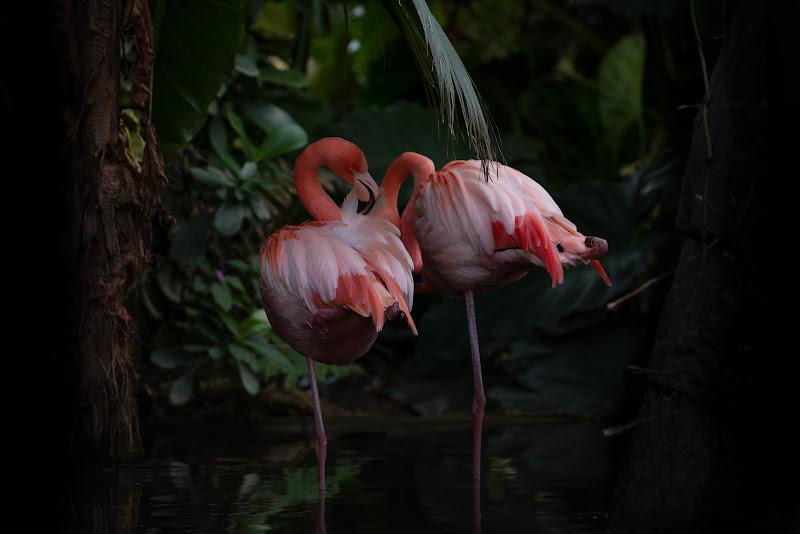 Pink natural di Giancarlo Lava