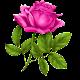 Good morning Flower Wallpapers Colorful Roses 4K APK