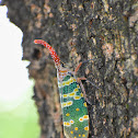Lanternfly / Lantern Bug