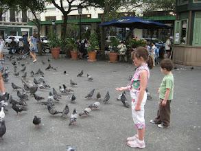 Photo: Pigeons in Old San Juan