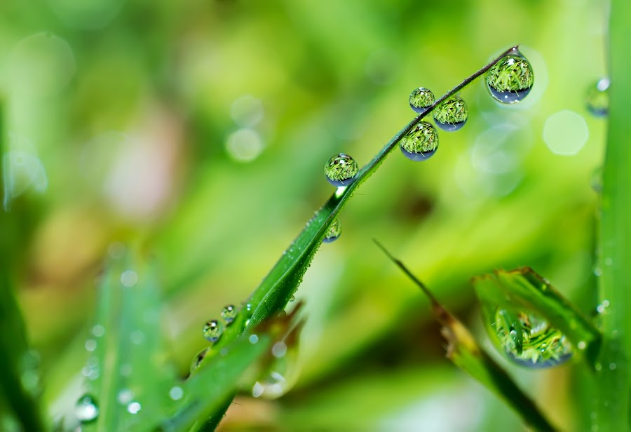 grass and dew by Maria Ulfah - Abstract Water Drops & Splashes