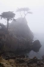 Photo: TheLone Cypress - 17-Mile Drive. Pebble Beach, CA