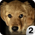 Find a Dog 2 - Hidden Object icon