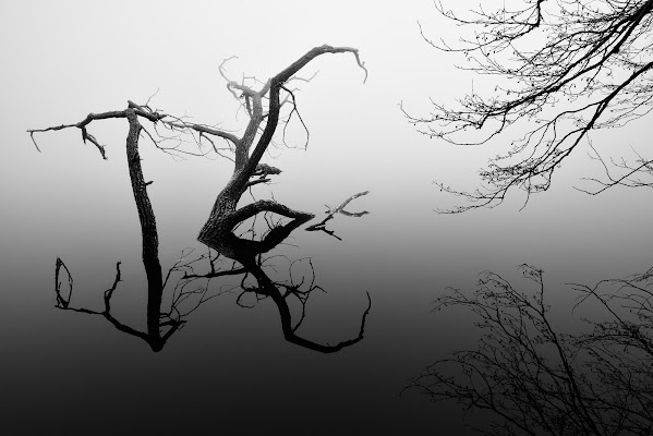 Riflessi tra la nebbia di Francescogiacomo