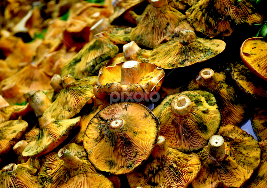 Mushrooms by Wendy Taylor - Food & Drink Fruits & Vegetables ( mushroom, market, green, gold, upside down )