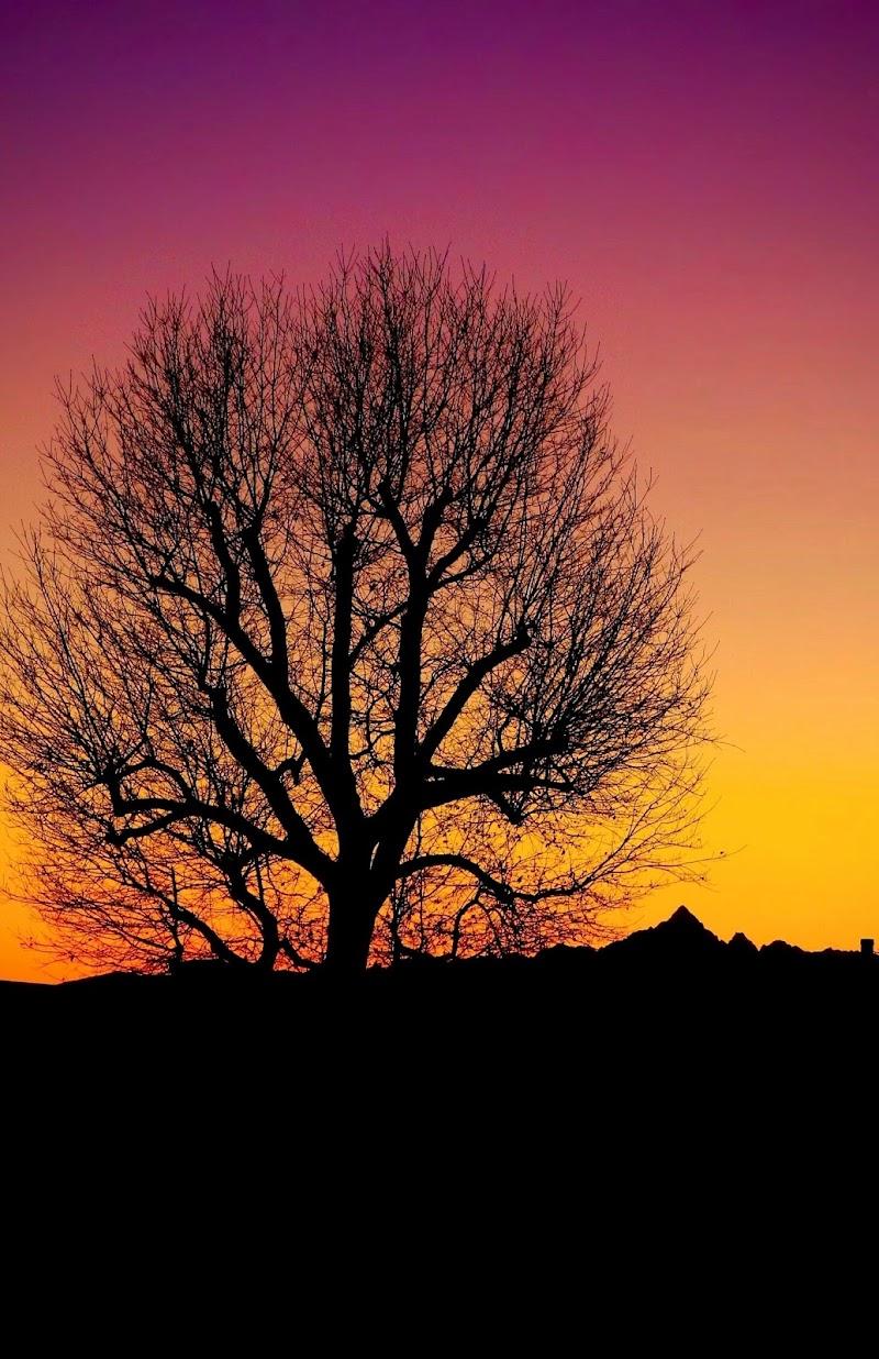 Monviso al tramonto. di daniela_bressan