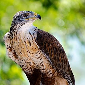 Hawk type thingy. by Steve Forbes - Uncategorized All Uncategorized (  )