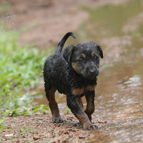 Just had a bath.. by Vivek Chethan Muliya - Animals - Dogs Puppies