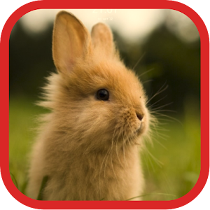 download Cute Rabbit Wallpapers apk