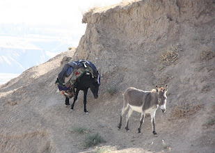Photo: Day 167 -  Donkeys Finding Their Own Way Home