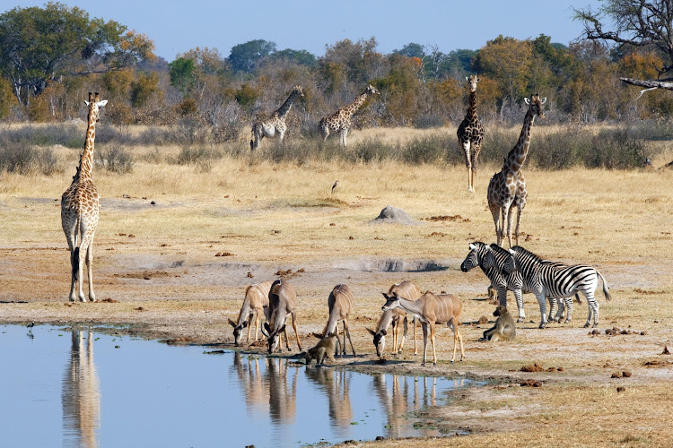 Animals enjoy a drink at Nyamandhlovu waterhole in Hwange National Park.