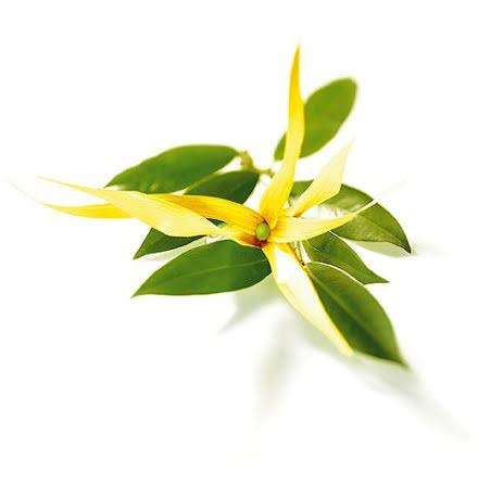 Ylang ylang III - ekologisk eterisk olja