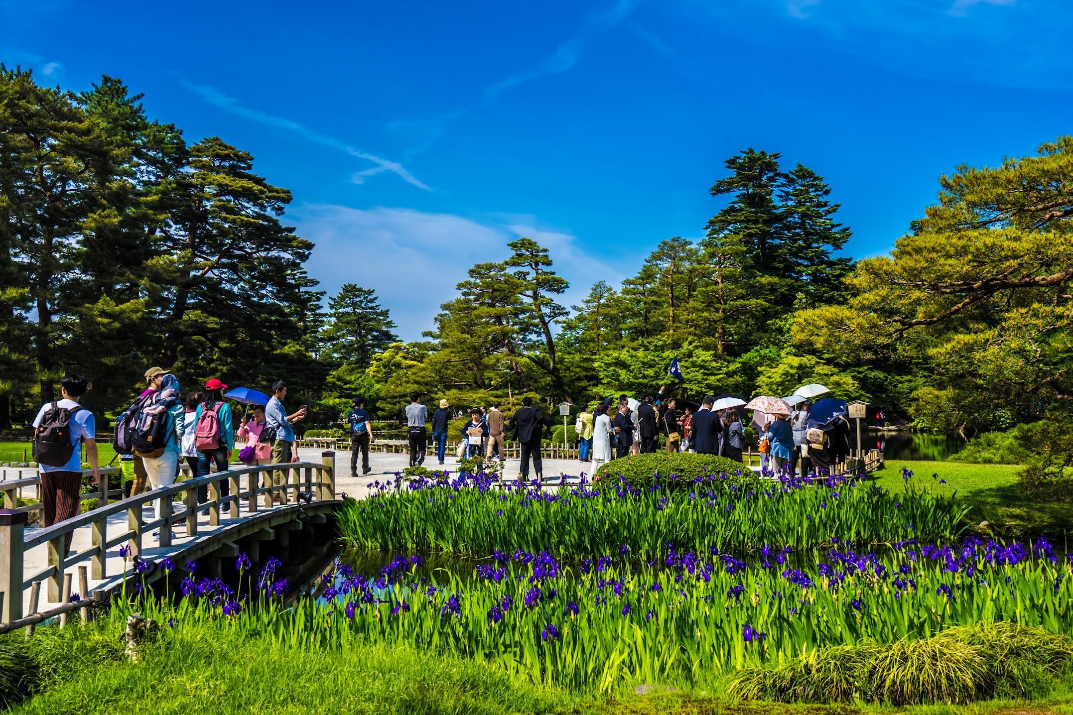 Kenrokuen Garden Iris