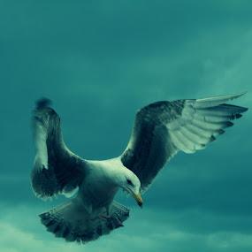 A landing in Brighton, UK by Doram Jacoby - Animals Birds