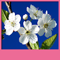 Spring Live Wallpapers icon