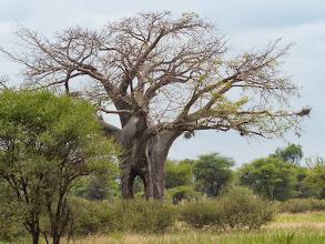 Photo: Elephants created hole? Hiding spot for poachers.