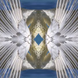 Angel Wings by Joan Sharp - Digital Art Abstract ( blue background, center, angel wings, abstract, digital art )