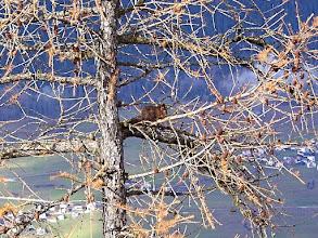 Photo: Stierva - Eichhörnchen vom Sitzplatz aus