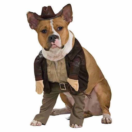可爱的小狗服饰