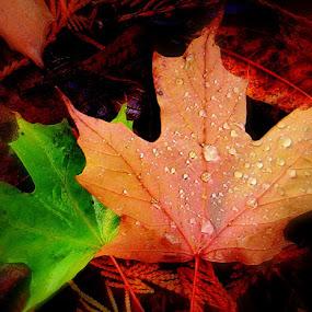 Leaf contrast by Liz Hahn - Nature Up Close Leaves & Grasses (  )