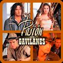 Pasión de Gavilanes Quiz Game icon
