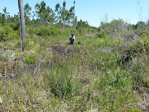 "Photo: Brian filming the meanwhile extinct Sarracenia leucophylla ""pink tube"" at Tate's Hell (Florida Panhandle)."
