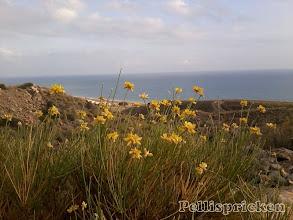Photo: Gula blommor mot blått hav och vitblå himmel, kan det bli vackrare?