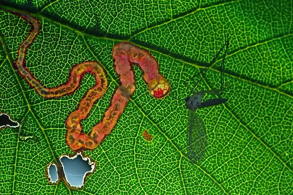 red snake di fabio_sartori