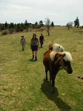 Photo: We seem to have picked up a couple more participants in our hike...