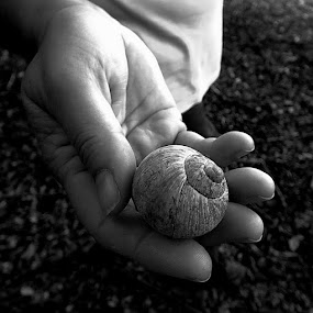 shell by Renato Dibelčar - Nature Up Close Other Natural Objects ( hand, shell, nature, outdoor, forest, black )
