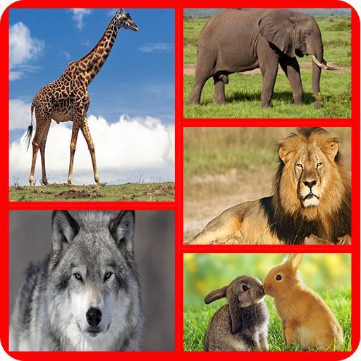 Wild Animals Quiz - For Kids