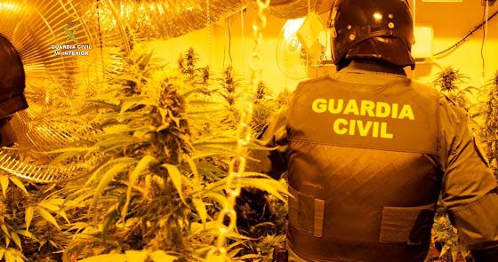 Golpe a la mafia de la 'maría' en el Poniente: 45 detenidos y miles de plantas