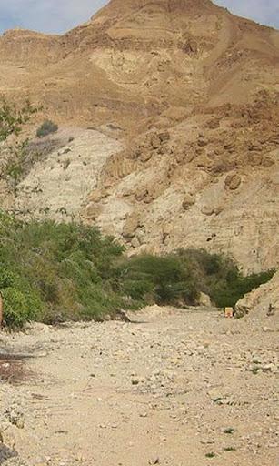 National Reserve of Ein Gedi