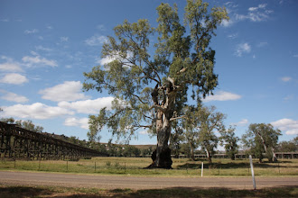 Photo: Year 2 Day 227 - Two Trestle Bridges in Gundagai (One for the Railway and One for the Road)